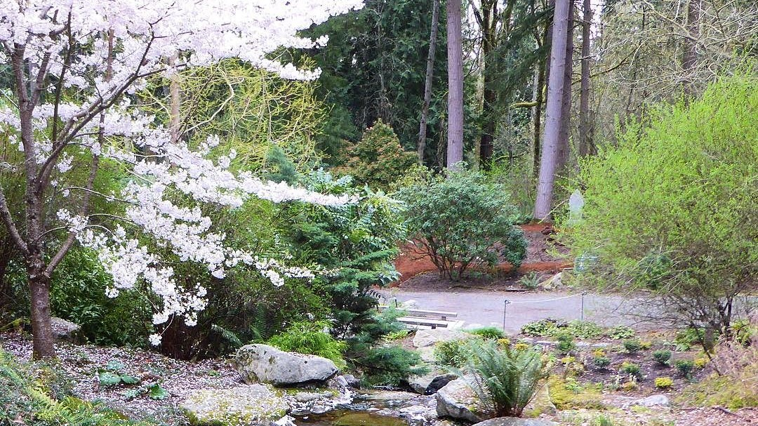 Bellevue Botanical Garden Nerd 39 S Eye View