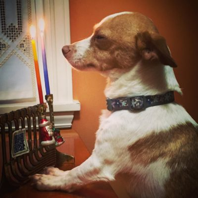 Harley the Dog with a menorah